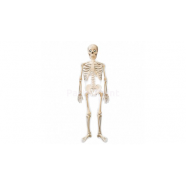 Air-Walker-Sétáló csontvázfólia lufi